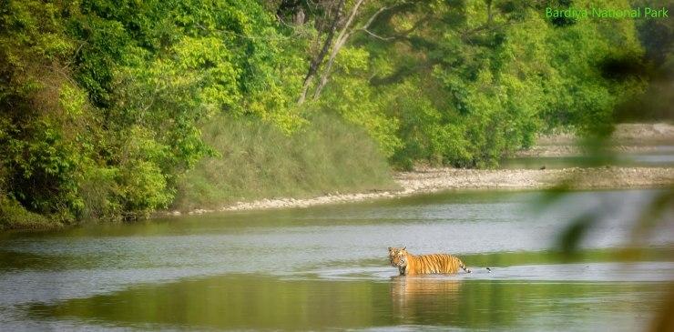 Bardiya National Park,Tourist Destination In western Nepal