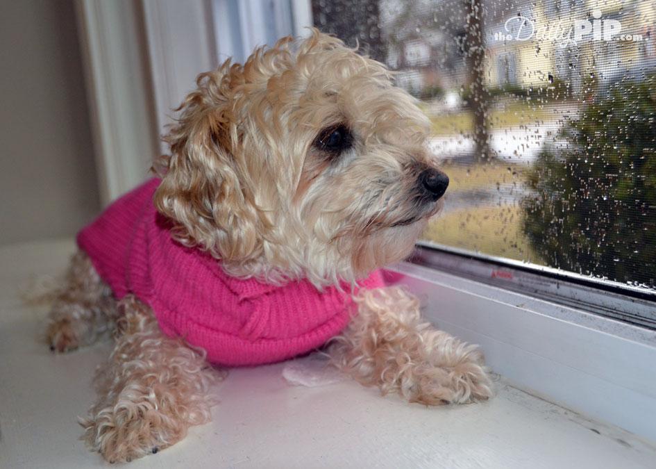 When It Just Won't Stop Raining