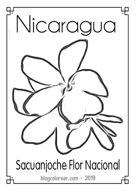 Colorear flor Nacional de Nicaragua
