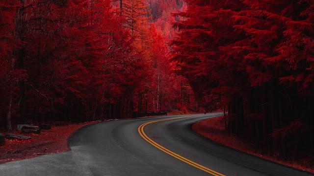 Celular Linda Paisagem de Outono na Estrada