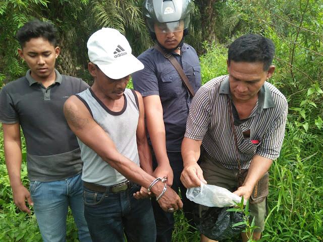 Polisi menemukan ganja yamg disimpan tersangka di semak-semak.