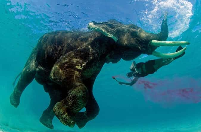 Snorkeling with Elephant
