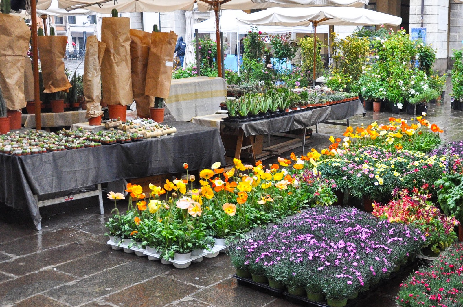 Setting up the flower stalls, 7th Edition of 'Fiori, colori, e...' - Floriculture market show, Vicenza, Italy