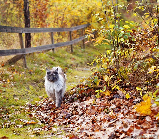 cat with autumn leaves