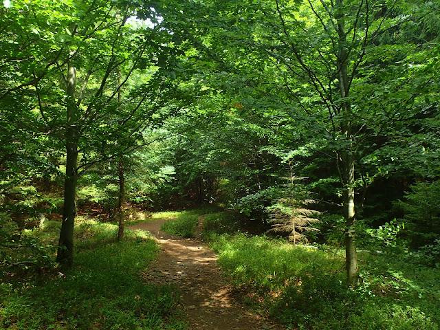 Las w Górach Złotych