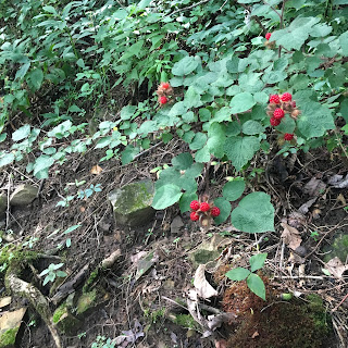 Red berries along the trail.