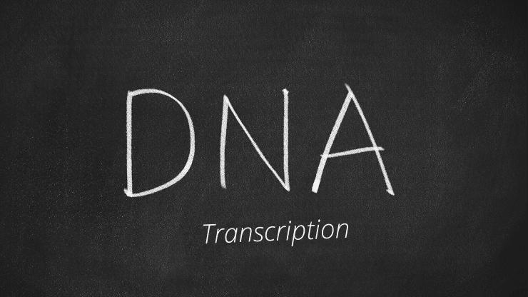 DNA-transcription
