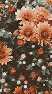 خلفيات زهور حلوة