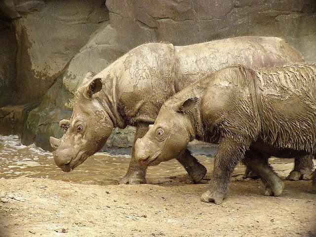 أنواع الحيوانات المهددة بالانقراض في العالم