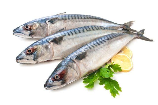 Gambar dan Foto Ikan Tenggiri