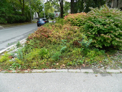 Forest Hill front yard fall clean up before by Paul Jung Gardening Services