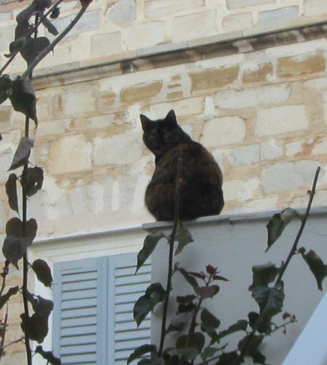 dd267df2633e Η Βασική Φροντίδα της Γάτας