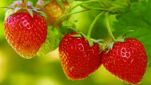 strawberry nutrition in urdu