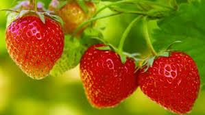 strawberry nutrition in urdu