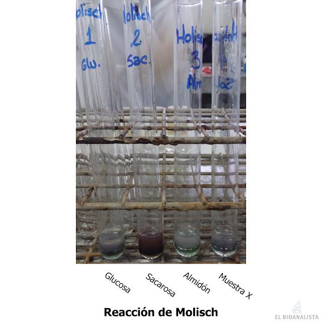 prueba de molisch bioquímica identificación de carbohidratos