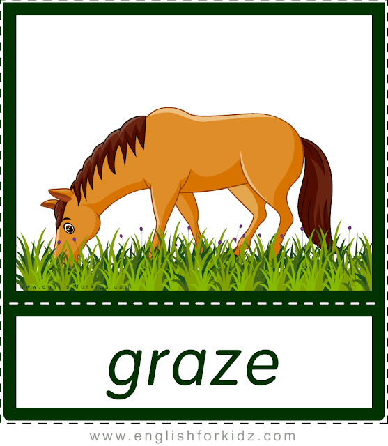 Verb graze (horse grazing) - printable animal actions flashcards for English learners
