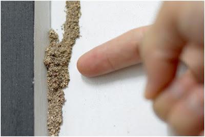 Subterranean Termites Cause