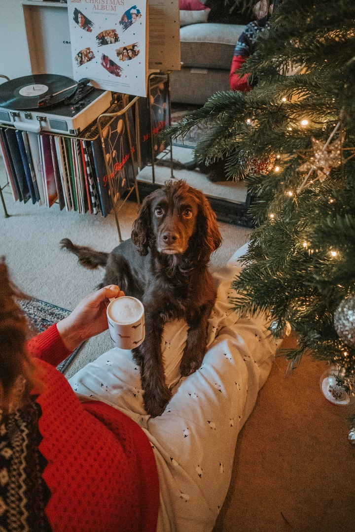 How to Feel Festive with your Dog