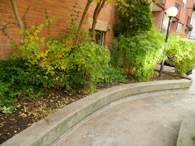 Downtown Toronto Fall Cleanup After by Paul Jung Gardening Services--a Toronto Organic Gardening Services Company