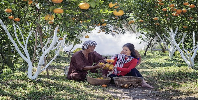Plano de Vida Feliz e Abundante, por Abdias Campos
