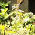 Британски учени накараха растения да си правят селфита
