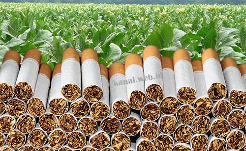 Mengapa Barang Kena Cukai Hasil Tembakau Wajib Dilekati Pita Cukai