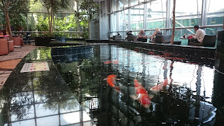 Koi fish at Changi Airport
