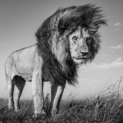 सपने में शेर देखने का क्या मतलब होता है? Sapne Me Sher Dekhna Ka Matlb