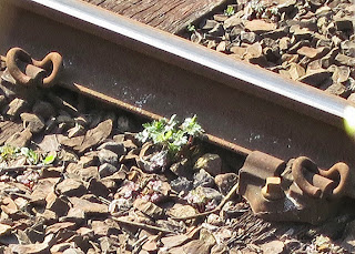 Zooming in on picture to see one of the plants growing against the rails.
