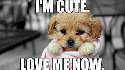funny memes about love with dog