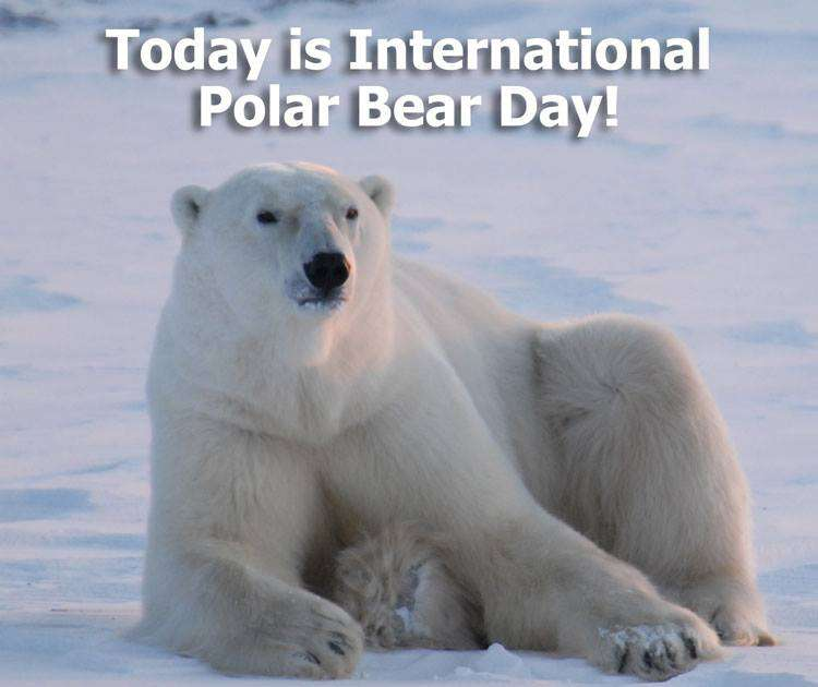 International Polar Bear Day Wishes