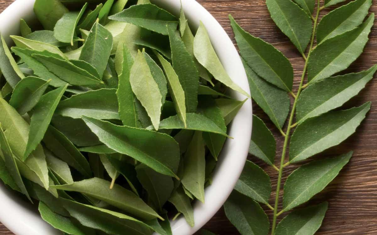 bienfaits pour la santé des feuilles de curry