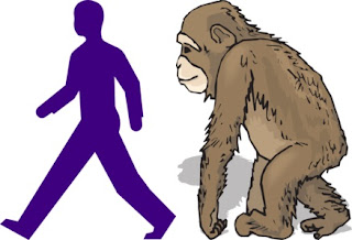 Anyone should be able to see that humans and apes are built to move differently. Scientists are examining chimpanzees to contribute to the myth that humans evolved the ability to walk upright.