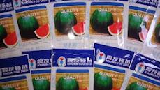 daun semangka, tanaman semangka, buah semangka, jual benih semangka, toko pertanian, toko online, lmga agro