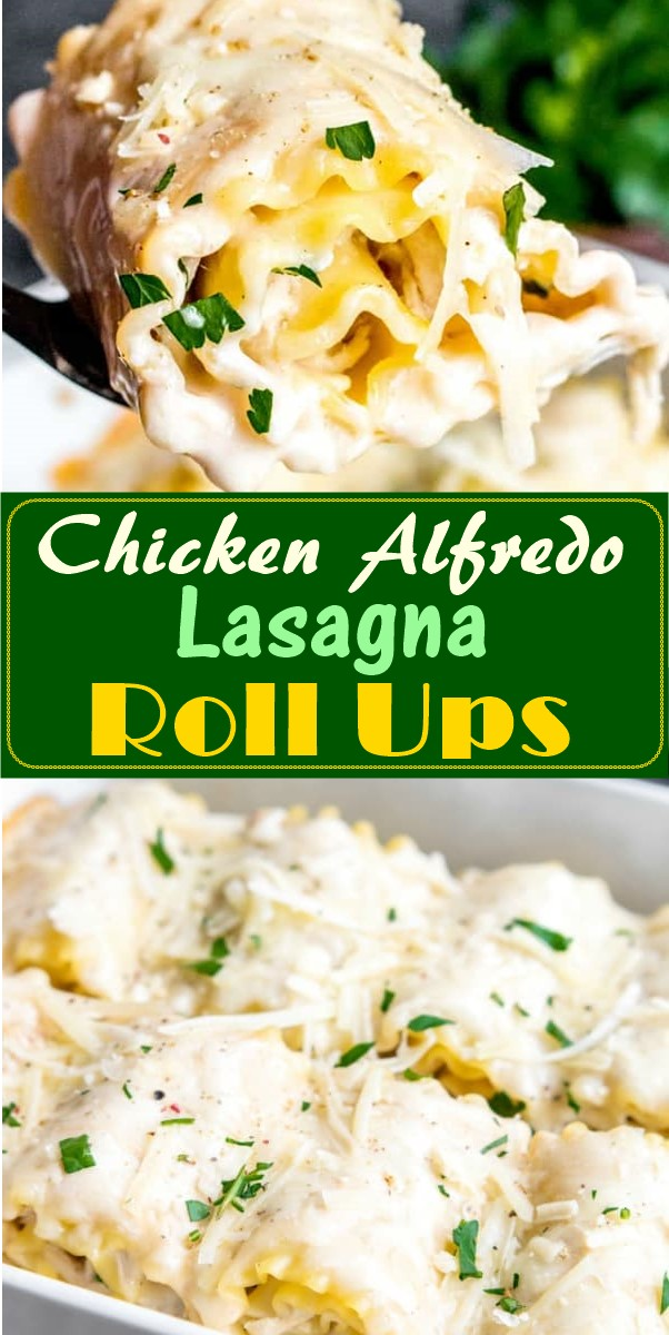 Chicken Alfredo Lasagna Roll Ups #chickenrecipes