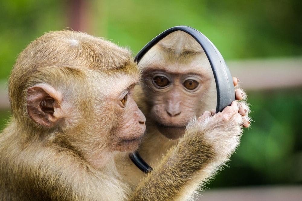 صور قرود - أجمل خلفيات القرود 2021