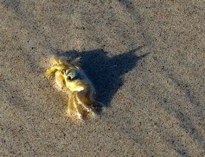 Kepiting - Sekitar Dunia Unik