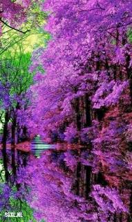 arboles-reflejados-en-el-agua-de-un-rio