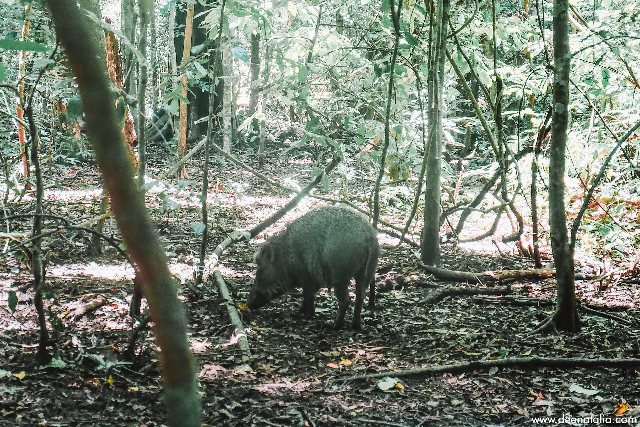 Karang Copong Ujung Kulon