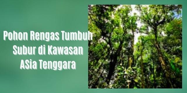 penyebaran pohon rengas