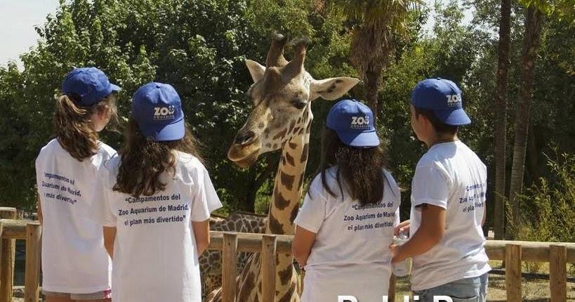 Zoo aquarium de madrid comienza sus campamentos de verano for Aquarium valencia precio