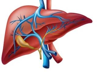 Liver Detoxification