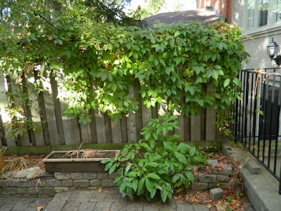 Toronto Fall Cleanup Bedford Park Backyard Garden before by Paul Jung Gardening Services