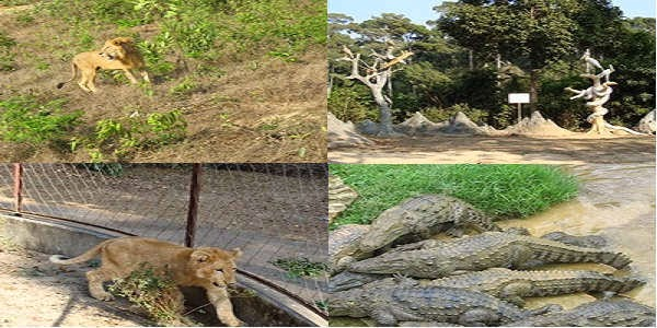 Images of Safari Park Cox's Bazar