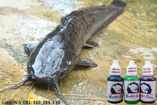 Oplosan Essen Ikan Lele