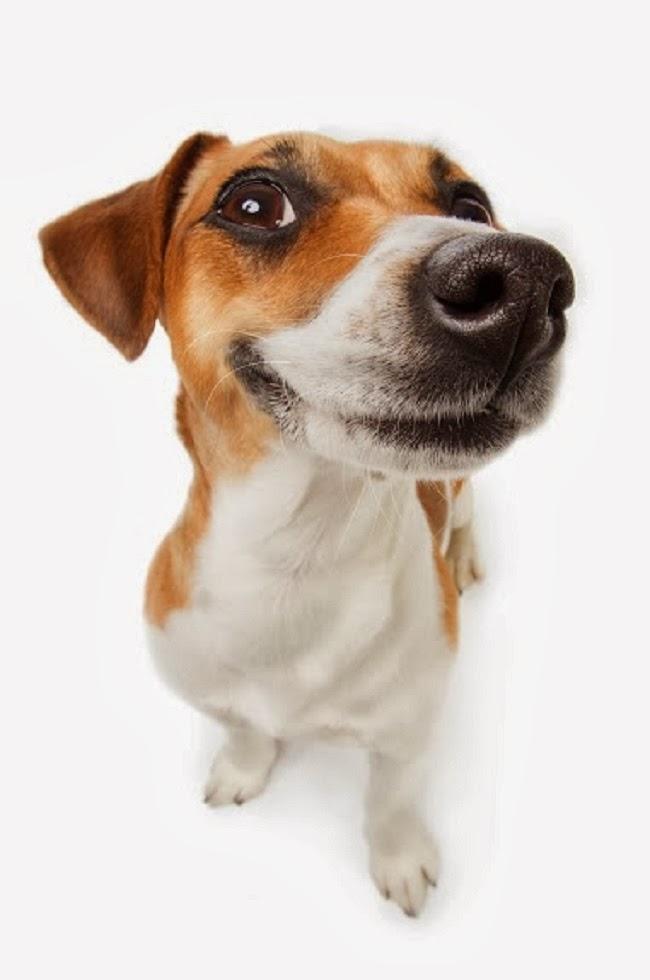 Jak przedłużyć psu życie