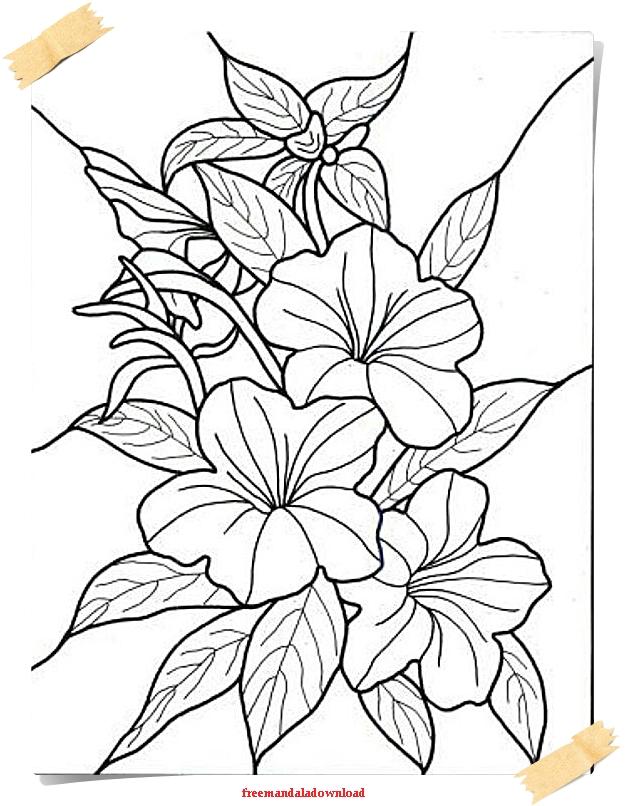 Malvorlagen Für Erwachsene Blumen Und Pflanzen Flowers And Plants