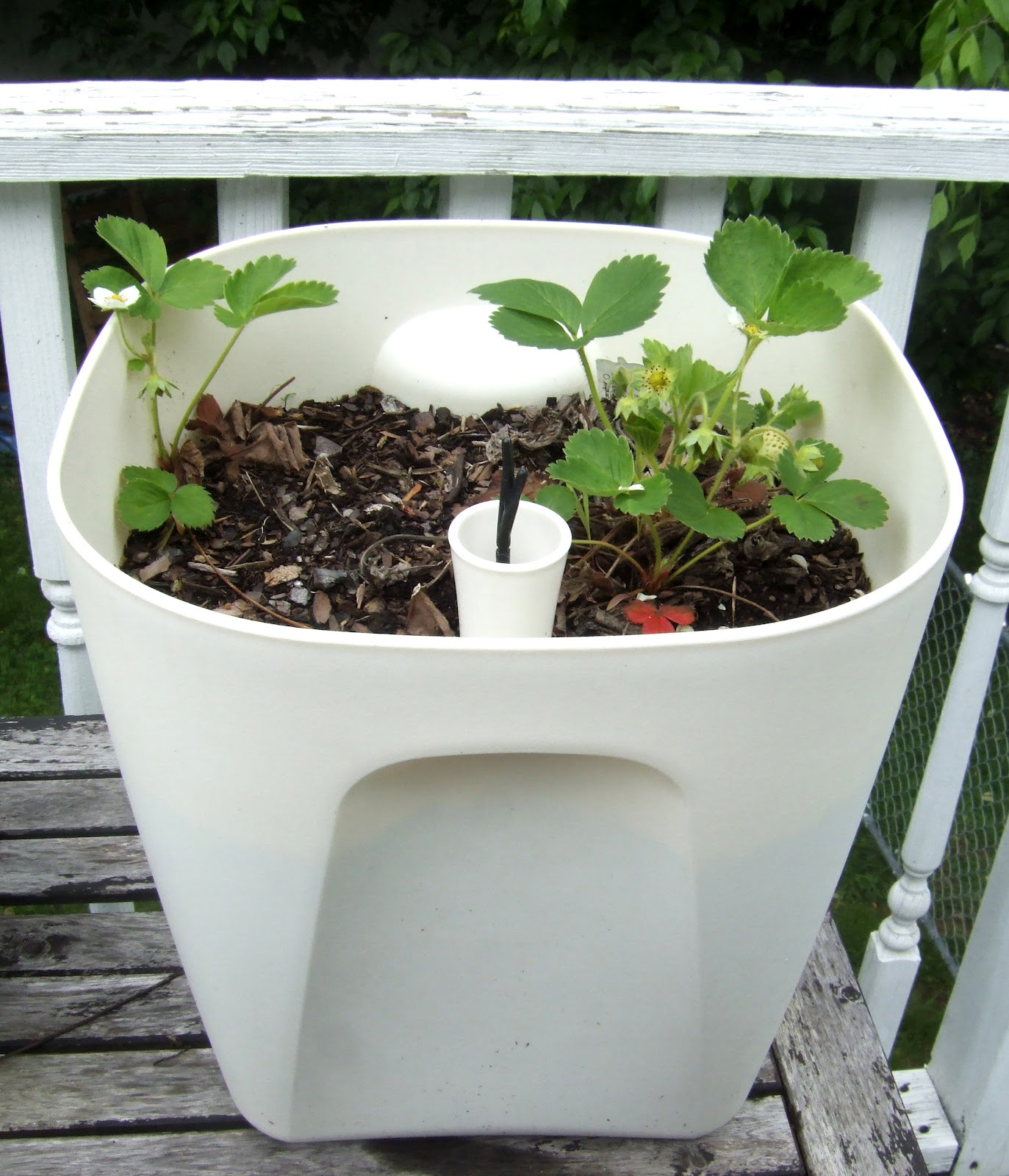 Self Watering Outdoor Planters Diy Self Watering Planter Options Little Victorian