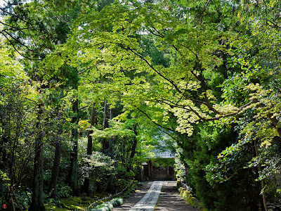 Fresh green leaves: Jyuhuku-ji