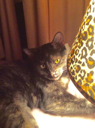 Tortie cat by a leopard print lamp